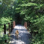 Finger Lakes Vacations