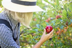 De-stress by picking apples