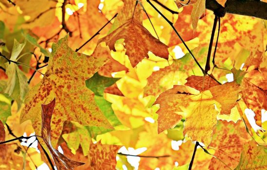 Enjoy Autumn in the Finger Lakes Region